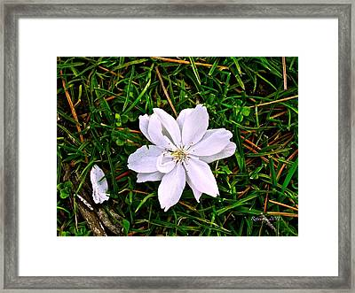 Clarity Framed Print by Rotaunja