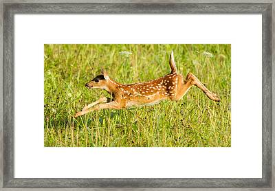 Classic Pose  Framed Print by Glenn Lawrence