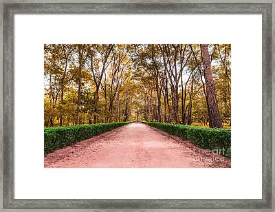 Clay Road In The National Park Framed Print by Mongkol Chakritthakool