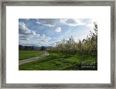 Clear Day Framed Print by Bruno Santoro