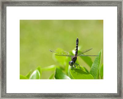Framed Print featuring the photograph Cleared For Take-off by Dan Wells