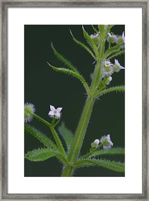 Framed Print featuring the photograph Cleavers by Daniel Reed