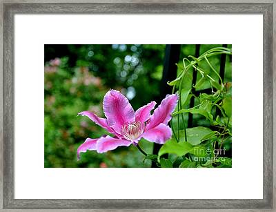 Framed Print featuring the photograph Clematis Bloom by Tanya  Searcy