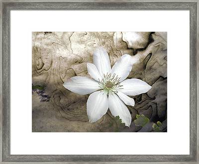 Clematis Framed Print by Richard Ortolano
