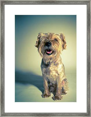 Cleveland Dog Framed Print by Square Dog Photography