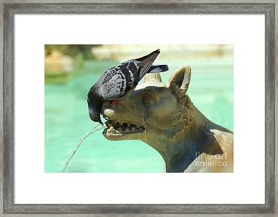 Using His Head Framed Print by Bob Christopher