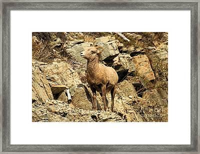 Cliff Hanger Framed Print by Adam Jewell