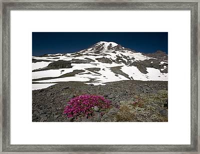 Cliff Penstemon (penstemon Serrulatus) Framed Print by Bob Gibbons