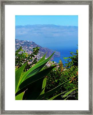 Cliffs Of Madeira Framed Print by Patricia Land