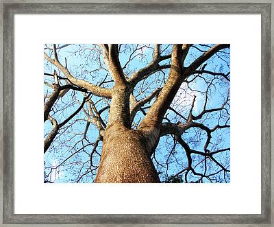 Climb To The Sky Framed Print by Rosvin Des Bouillons
