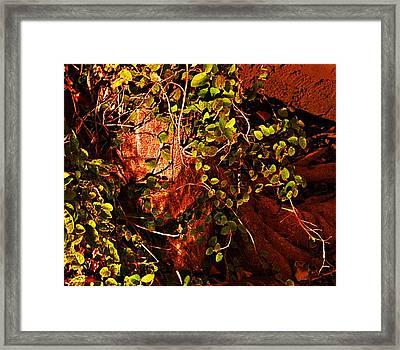 Climbing Magic Plant Framed Print by Susana Sanchez Giraud