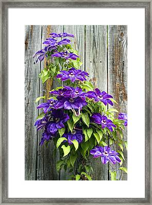 Climbing Purples Framed Print by Laura George