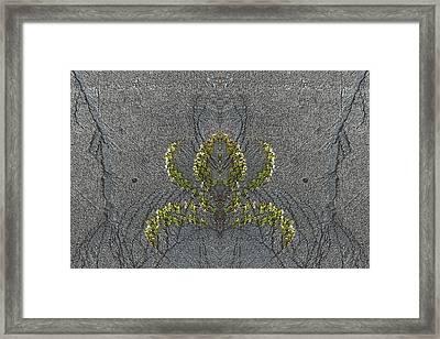 Climbing The Walls Framed Print by Tim Allen