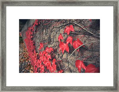 Clinging Framed Print by Laurie Search