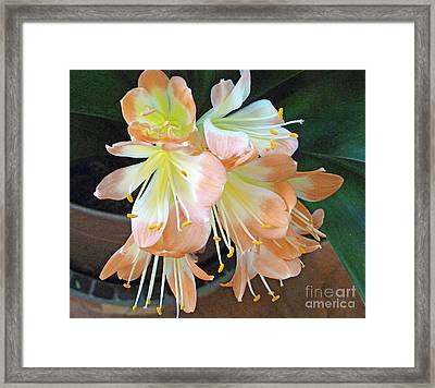 Clivia Framed Print by Louise Peardon