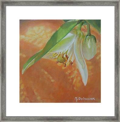 Clochette Orange Framed Print by Muriel Dolemieux