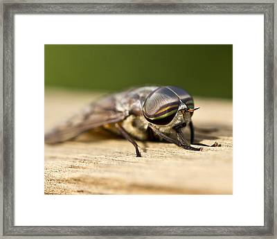 Close Encounter With A Horsefly Framed Print by Dean Bennett
