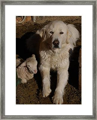 Framed Print featuring the photograph Close Personal Protection by Charles and Melisa Morrison