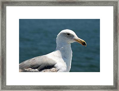 Close Seagull Framed Print by Wendi Curtis