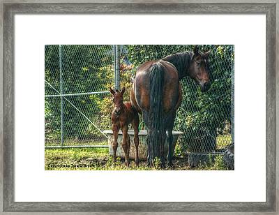 Close To Mama Framed Print by Tyra  OBryant
