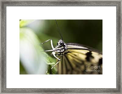 Close Up Framed Print by Leslie Leda