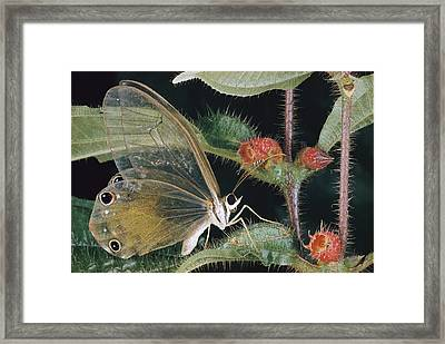 Close-up Of A Butterfly Framed Print