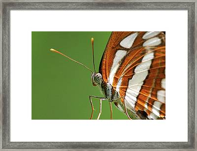Close Up Of Butterfly Framed Print by Annemarie van den Berg