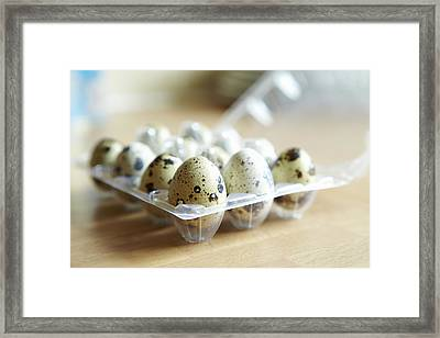 Close Up Of Carton Of Quail Eggs Framed Print by Debby Lewis-Harrison