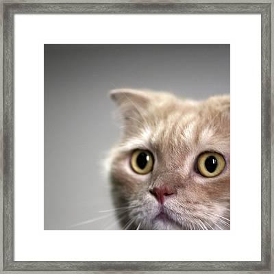 Close Up Of Cat Framed Print by LeoCH Studio