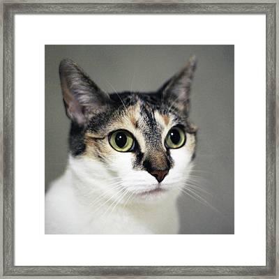 Close Up Of Cat Framed Print by Saulgranda