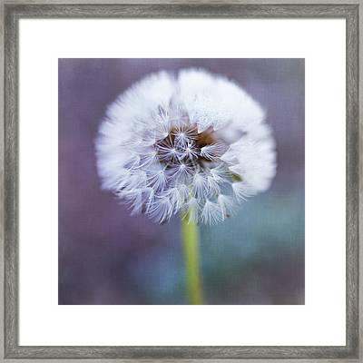 Close Up Of Dandelion Flower Framed Print by Pamela N. Martin
