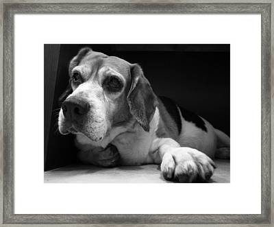 Close Up Of Dog Framed Print by Ricardo's snapshot