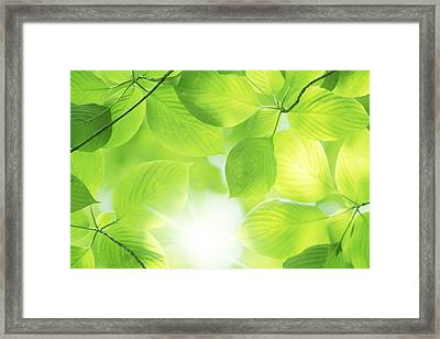 Close-up Of Fresh Green Leaves Framed Print
