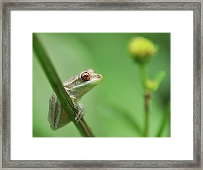 Close Up Of Frog Framed Print by Lon Fong Martin