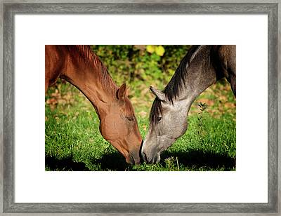Close Up Of Horses Framed Print