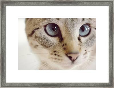 Close Up Of Kitten Framed Print