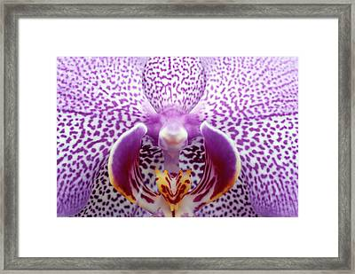 Close Up Of Orchid Flower Framed Print