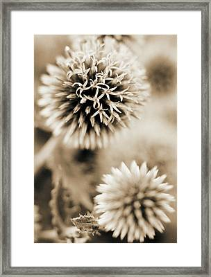 Close-up Of Spiky Plants Framed Print by Andrea Sperling