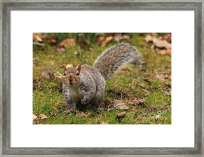 Why Are You Looking At Me Framed Print