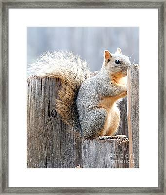 Checking If The Yard Clear For Dinner Framed Print