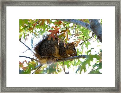 Checking The Side Yard For Dangers Framed Print