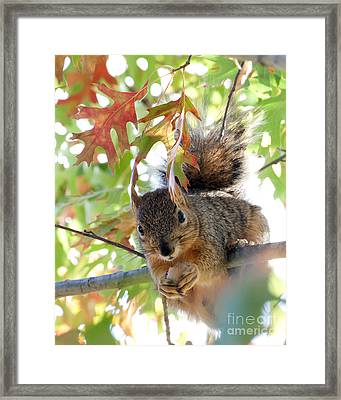 Eating In Peace Framed Print