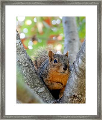 I Swear It Was Not Me Framed Print