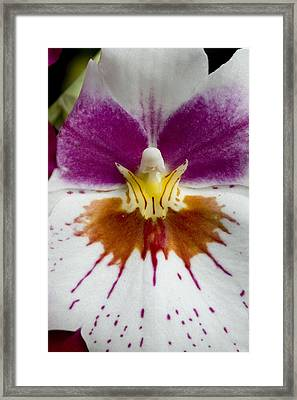 Close-up Of The Center Of An Orchid Framed Print by Todd Gipstein