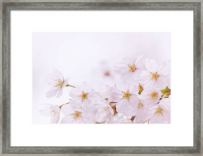 Close Up Of White Background Framed Print by Imagewerks