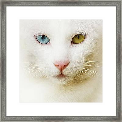 Close Up Of White Cat Framed Print by Blink