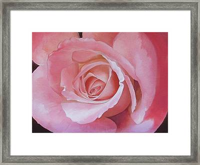 Close Up Painting Of Pink Rose Framed Print
