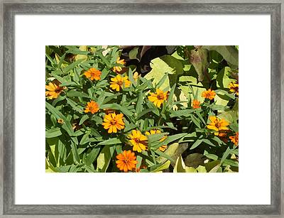 Close Up Yellow Daisies Framed Print