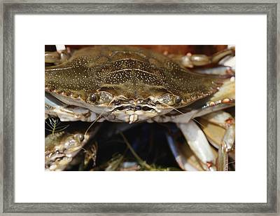 Close View Of A Blue Crab Showing All Framed Print
