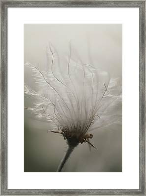Close View Of A Feathery Seed Pod Framed Print